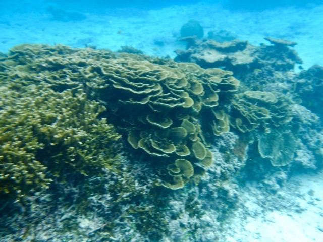 熱帯魚と泳ぐシュノーケリング